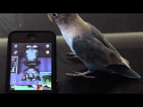 Snoozie the Lovebird and Talking Tom Cat 2